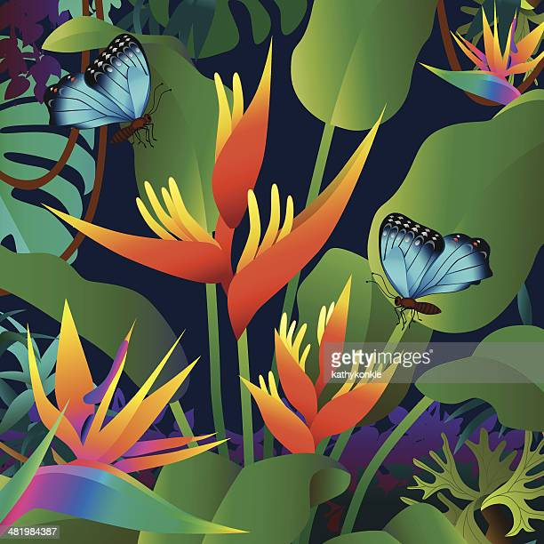 orange heliconia and morpho butterflies
