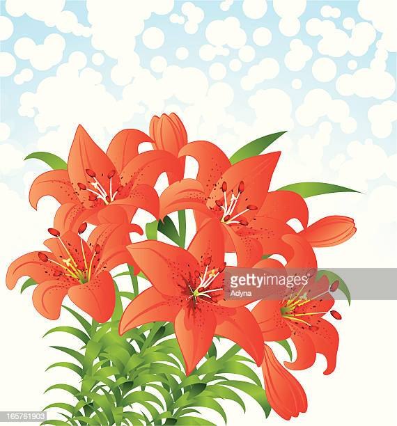 orange lily - easter lily stock illustrations