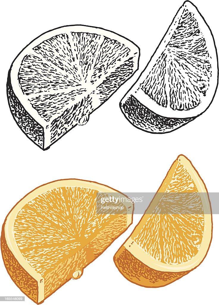 Orange Slice Stock Illustration - Getty Images