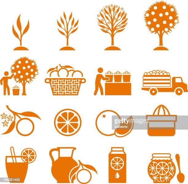 orange tree growing and organic farming black & white icons - orange juice stock illustrations, clip art, cartoons, & icons