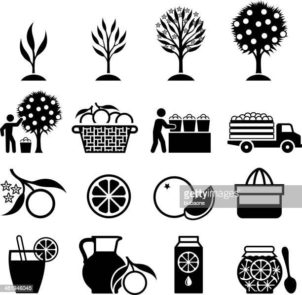 orange tree growing and organic farming black & white icons - harvesting stock illustrations