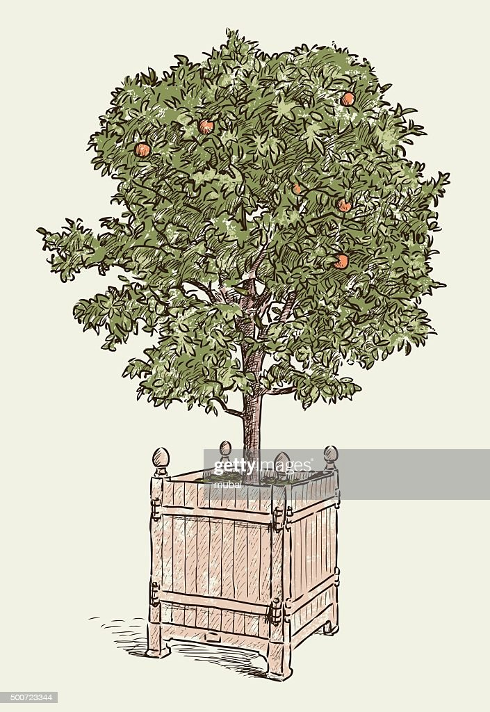 orange tree in the flowerpot