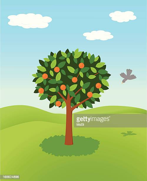 orange tree - fruit tree stock illustrations