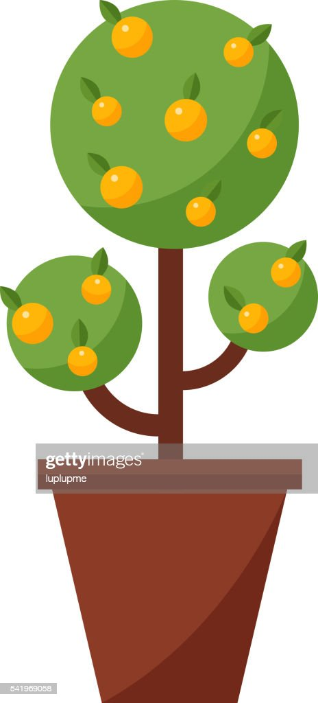 Orange tree vector illustration.