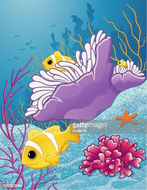 ilustrações, clipart, desenhos animados e ícones de peixe-palhaço laranja-aleta / poisson palhaço à deux bandes - organismo aquático