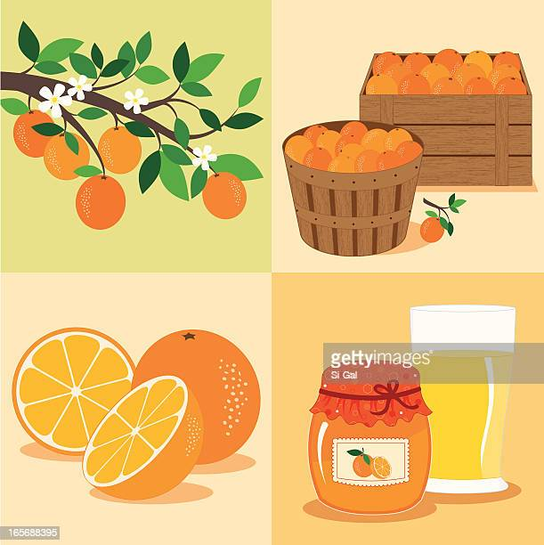 oranges from tree to table - marmalade stock illustrations, clip art, cartoons, & icons