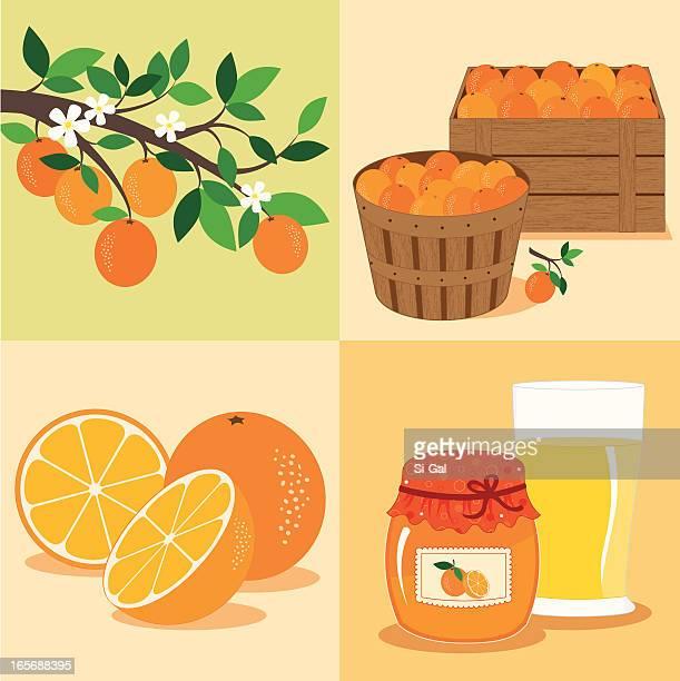 stockillustraties, clipart, cartoons en iconen met oranges from tree to table - orange