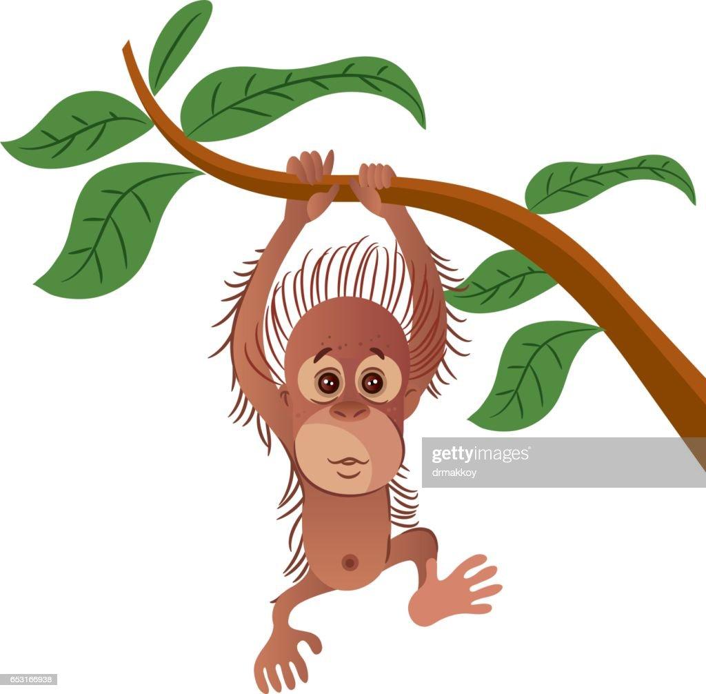 Orangutang : Vektorgrafik