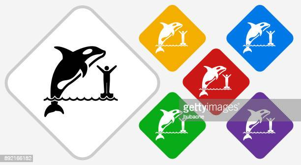 orca color diamond vector icon - killer whale stock illustrations, clip art, cartoons, & icons