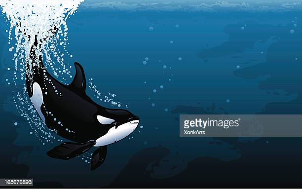 orca dive widescreen - killer whale stock illustrations, clip art, cartoons, & icons