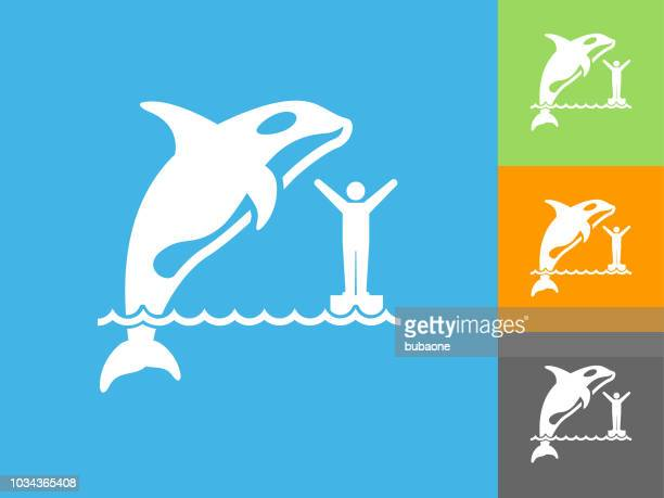 orca flat icon on blue background - killer whale stock illustrations, clip art, cartoons, & icons
