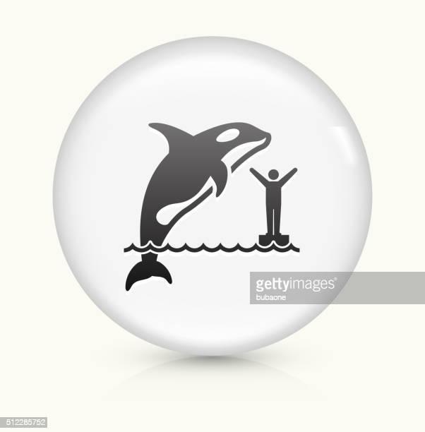 Orca icono sobre blanco, Vector de redondo botón
