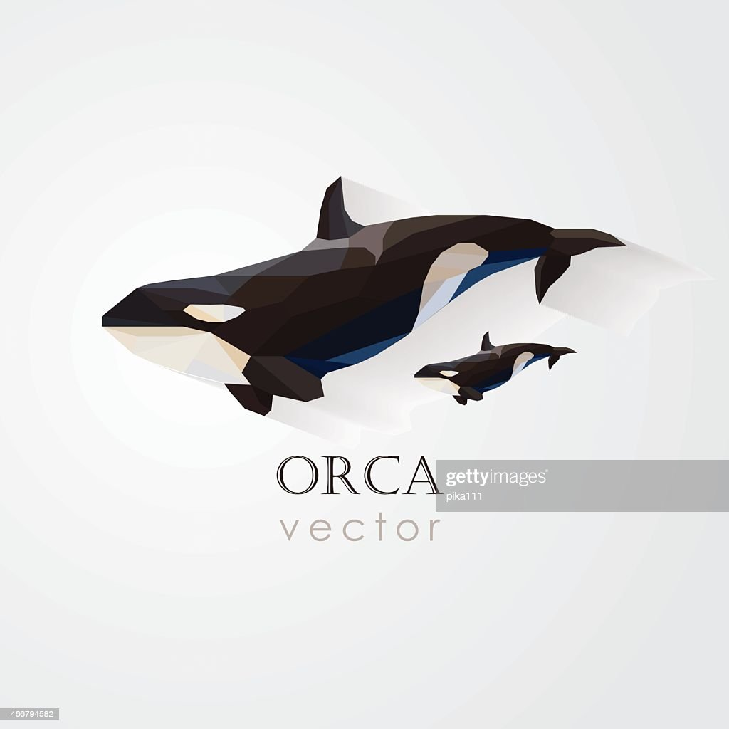 orca killer whale and its baby vector illustration- low poly