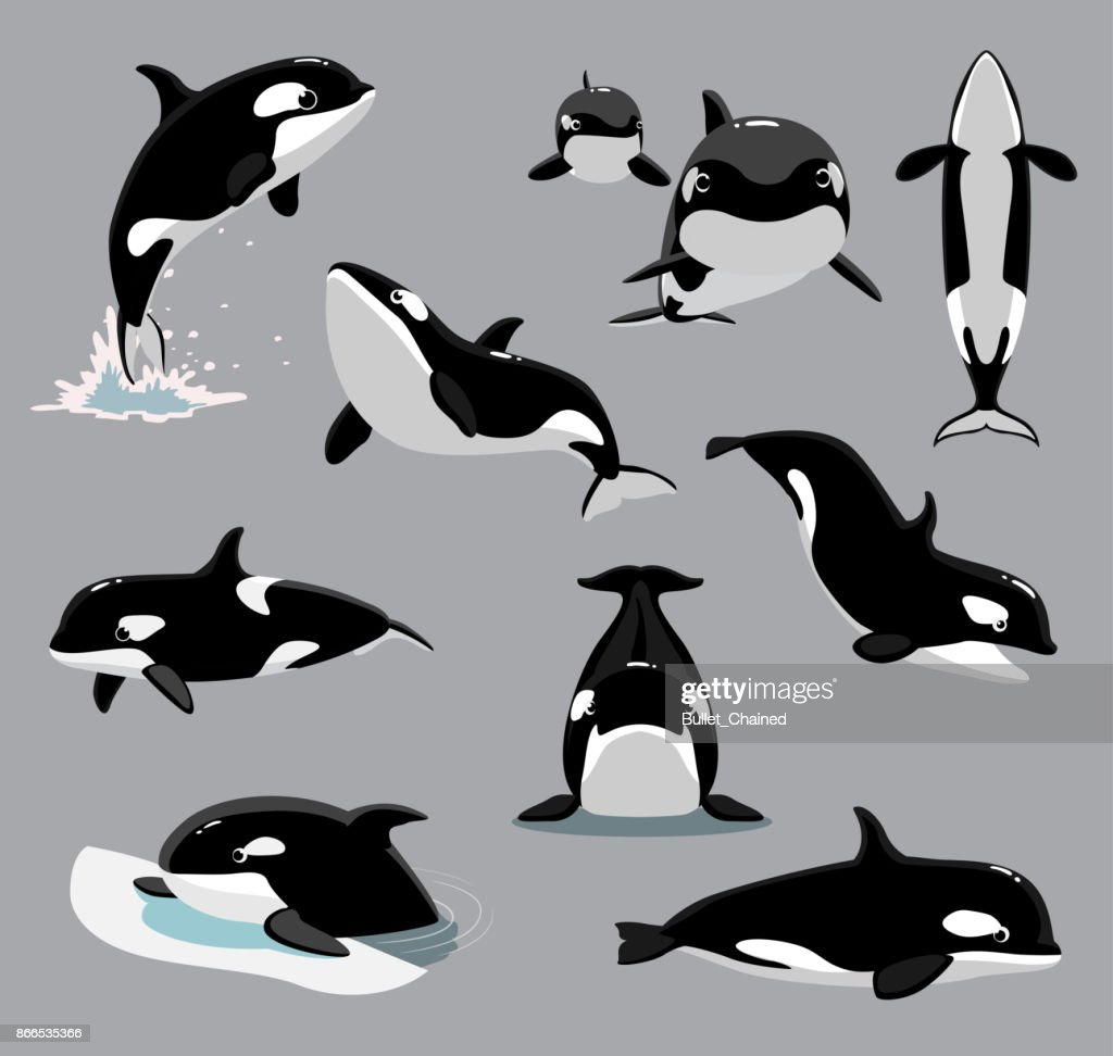 Orca Killer Whale Poses Cartoon Vector Illustration