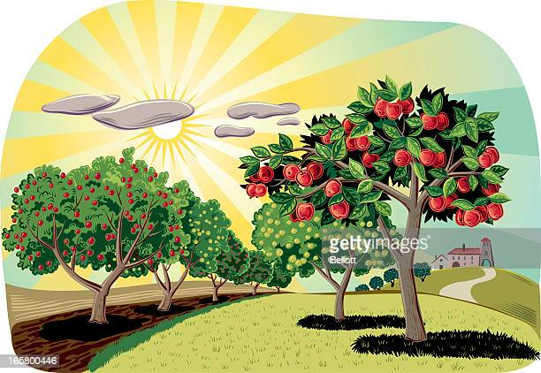 orchard - fruit tree stock illustrations