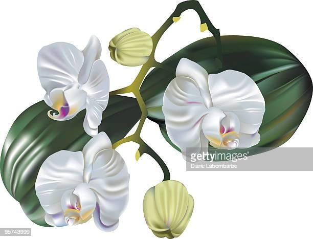 オーキッド blooms-グラデーションメッシュ - clip art点のイラスト素材/クリップアート素材/マンガ素材/アイコン素材