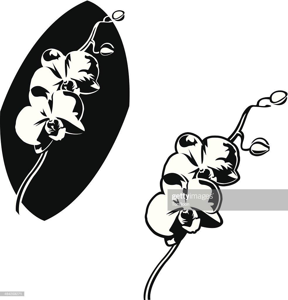 orchid Orchidaceae : Vector Art