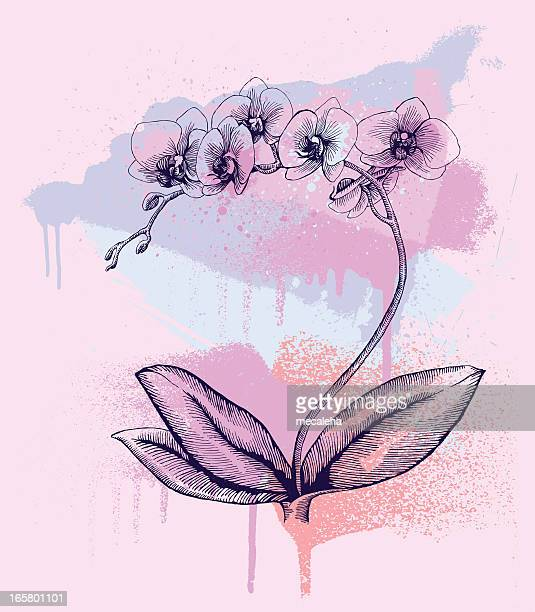 orchid - plant bulb stock illustrations, clip art, cartoons, & icons