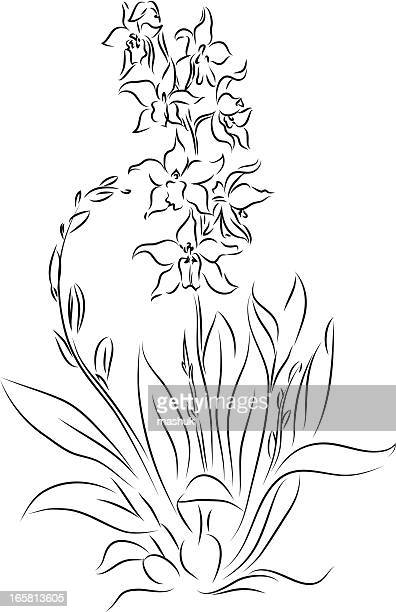 orchid - aromatherapy stock illustrations, clip art, cartoons, & icons