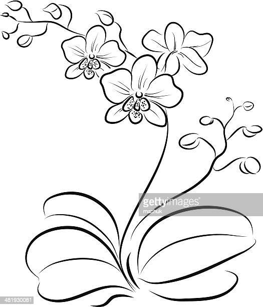 orchid - alternative therapy stock illustrations, clip art, cartoons, & icons