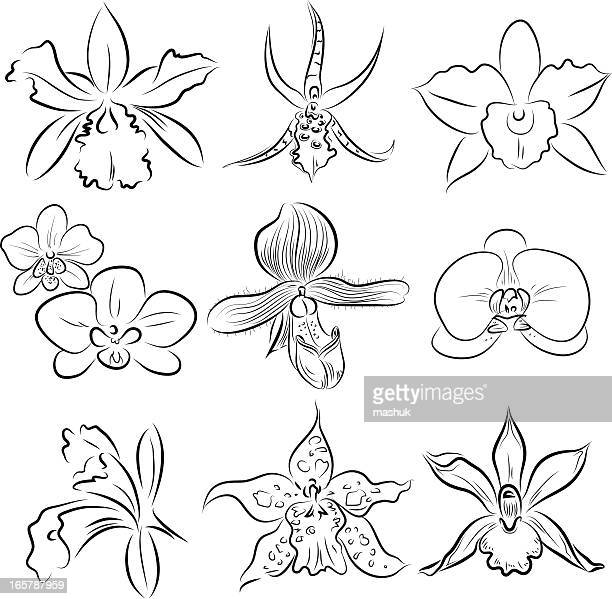 Dessin Fleur D Orchidée illustrations et dessins animés de orchidée | getty images