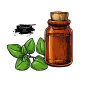 Oregano essential oil bottle and oregano leaves hand drawn vecto