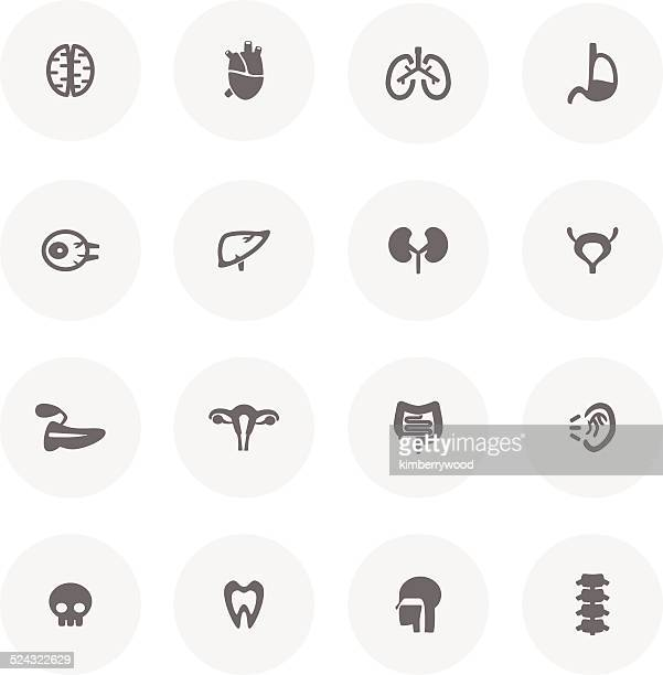 organ icon set - bladder stock illustrations, clip art, cartoons, & icons