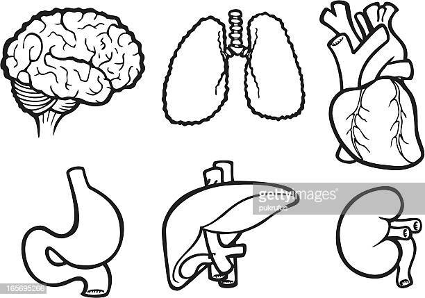 organ icons in black and white - human digestive system stock illustrations