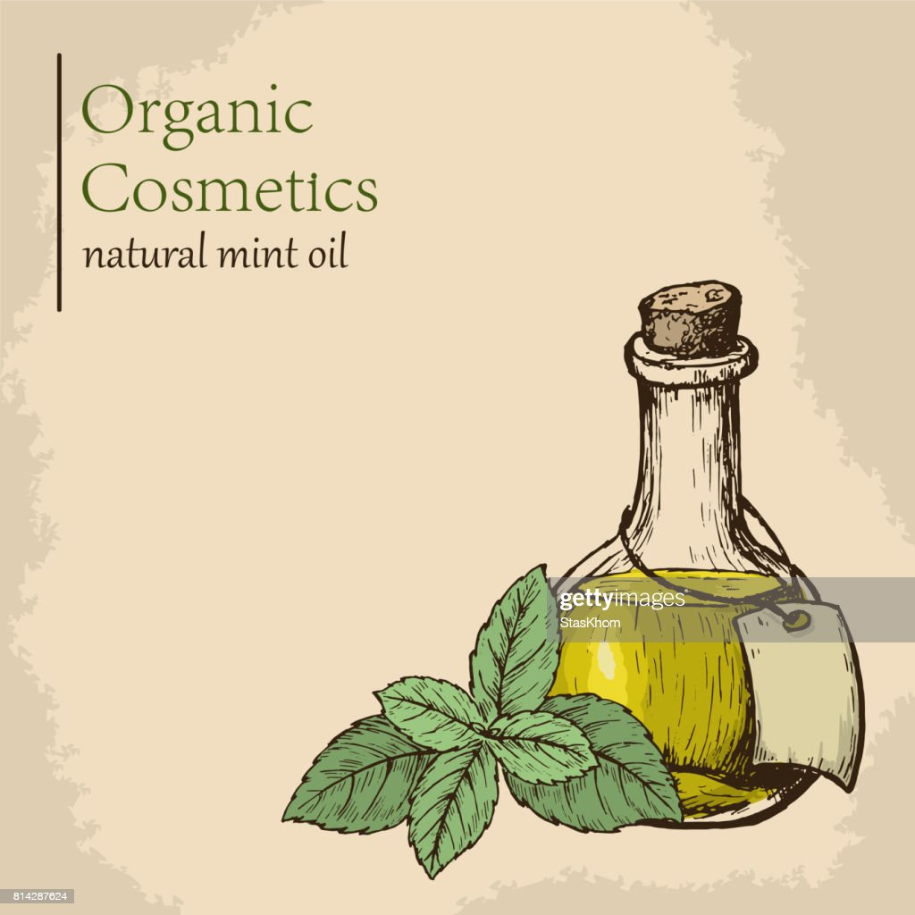 Organic essential mint oil with leaves. Vector illustration. Engraving style illustration