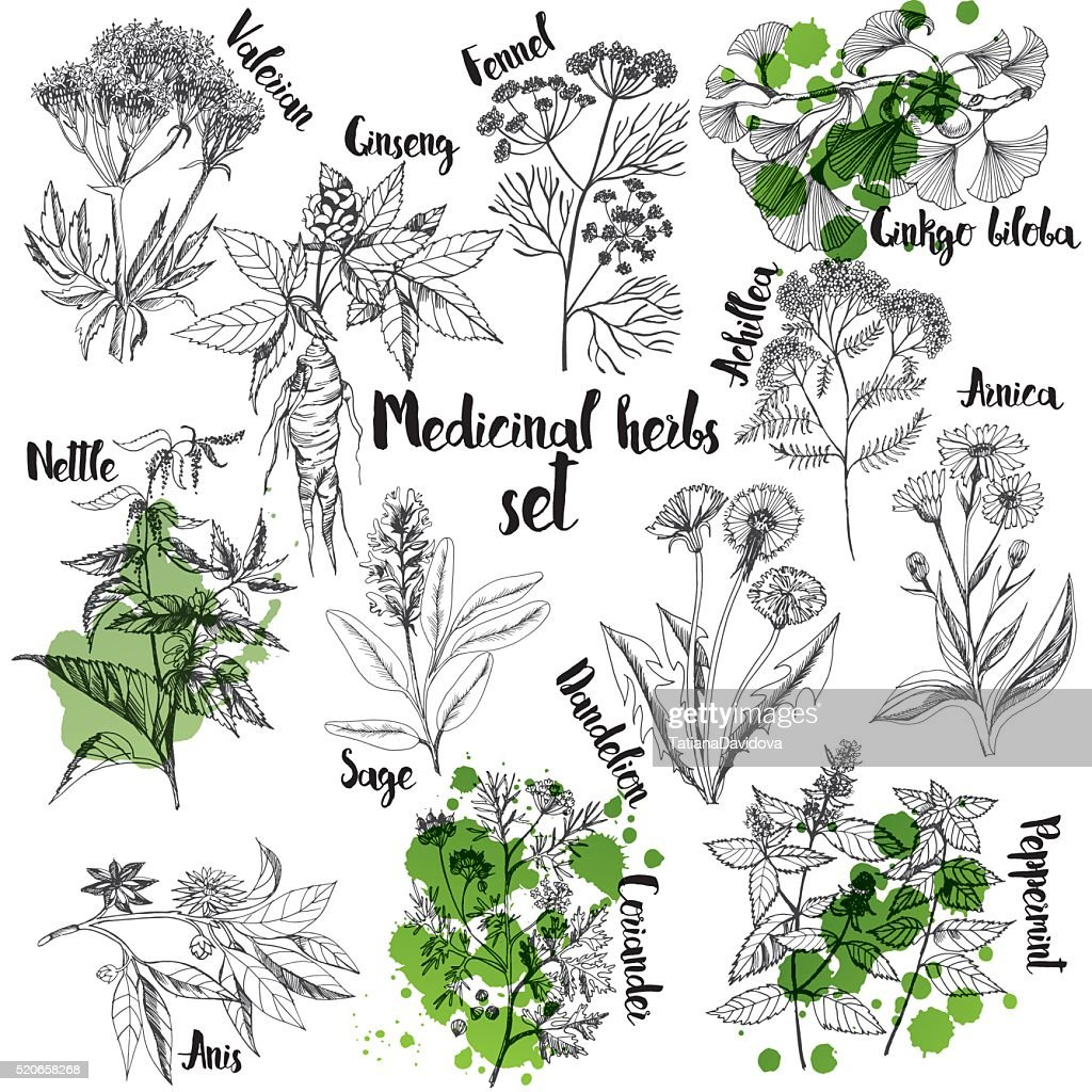 Organic herbs set of label