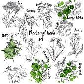 Organic herbs set of label
