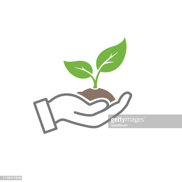 organic icon - seedling stock illustrations