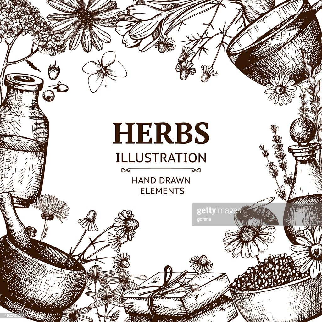 Organic plants sketch background.