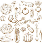Organically healthy vegetables retro sketches