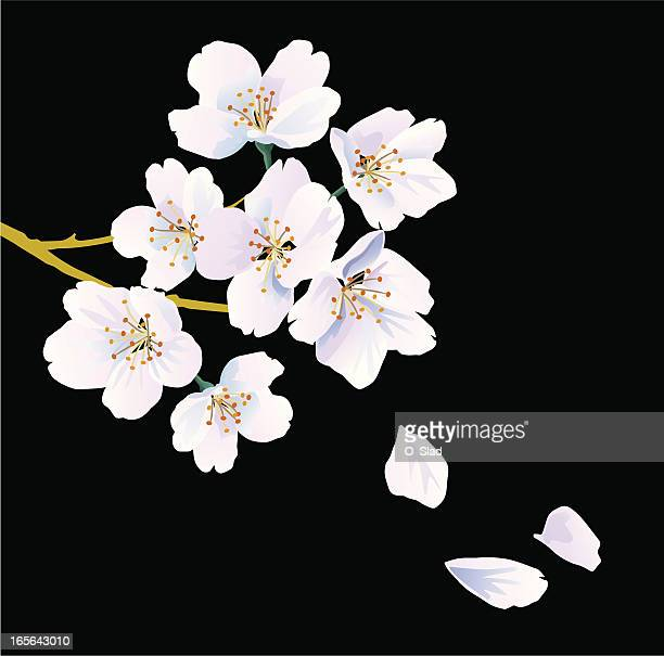 orientalische cherry - blütenblatt stock-grafiken, -clipart, -cartoons und -symbole