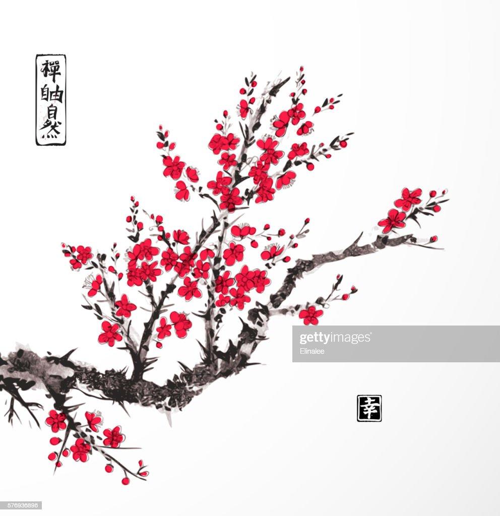 Oriental sakura cherry tree in blossom on white background