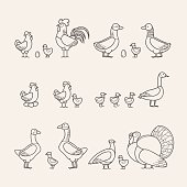 Outline Icons Set - Poultry