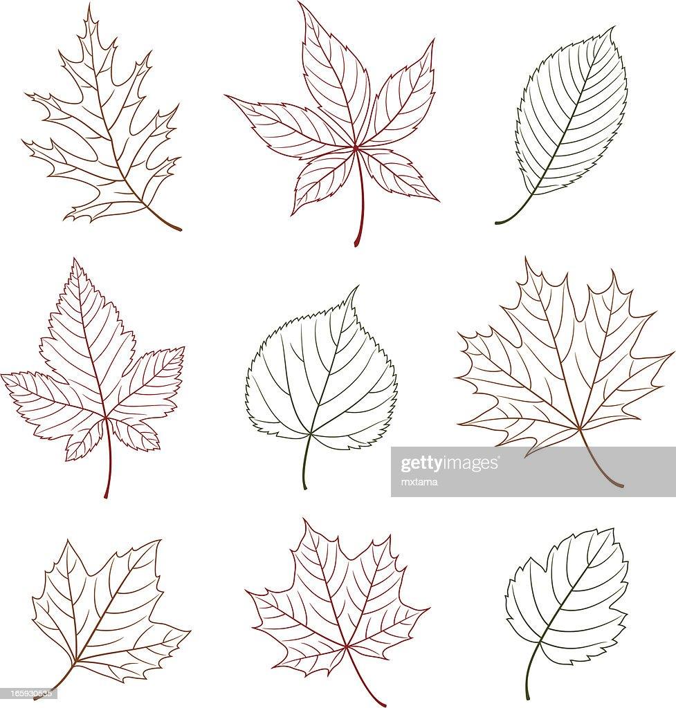 Outline Leaf Design Elements