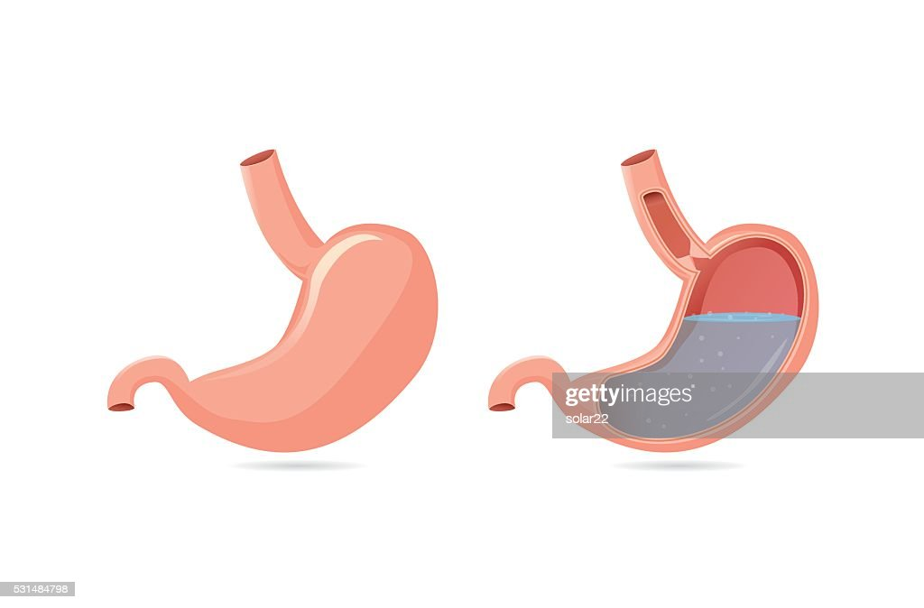 Outside of stomach and inside.