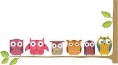 Owl branch