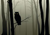 Owl In The Misty Woods