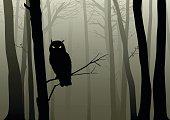 Owl In The Misty Woods