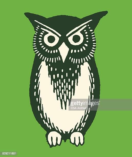 owl - owl stock illustrations