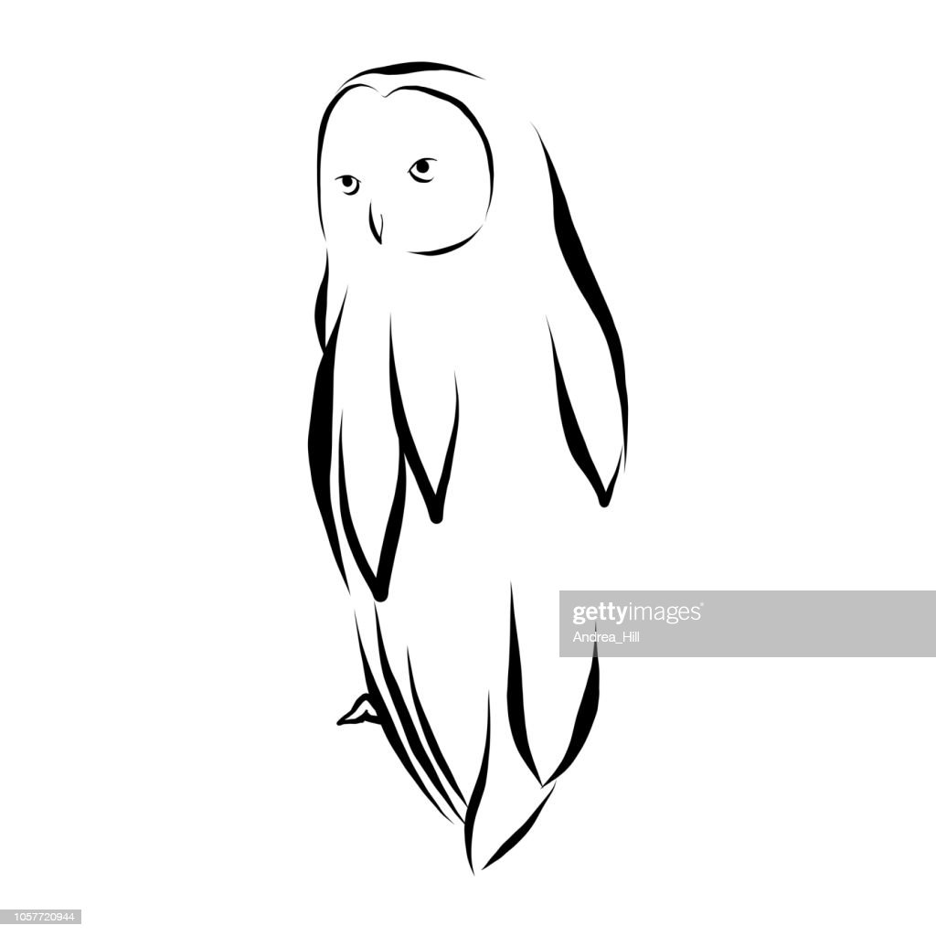 Owl Vector Illustration in Pen and Ink Isolated on White