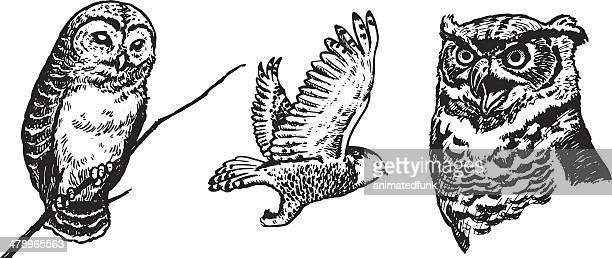illustrations, cliparts, dessins animés et icônes de owls illustration - chouette
