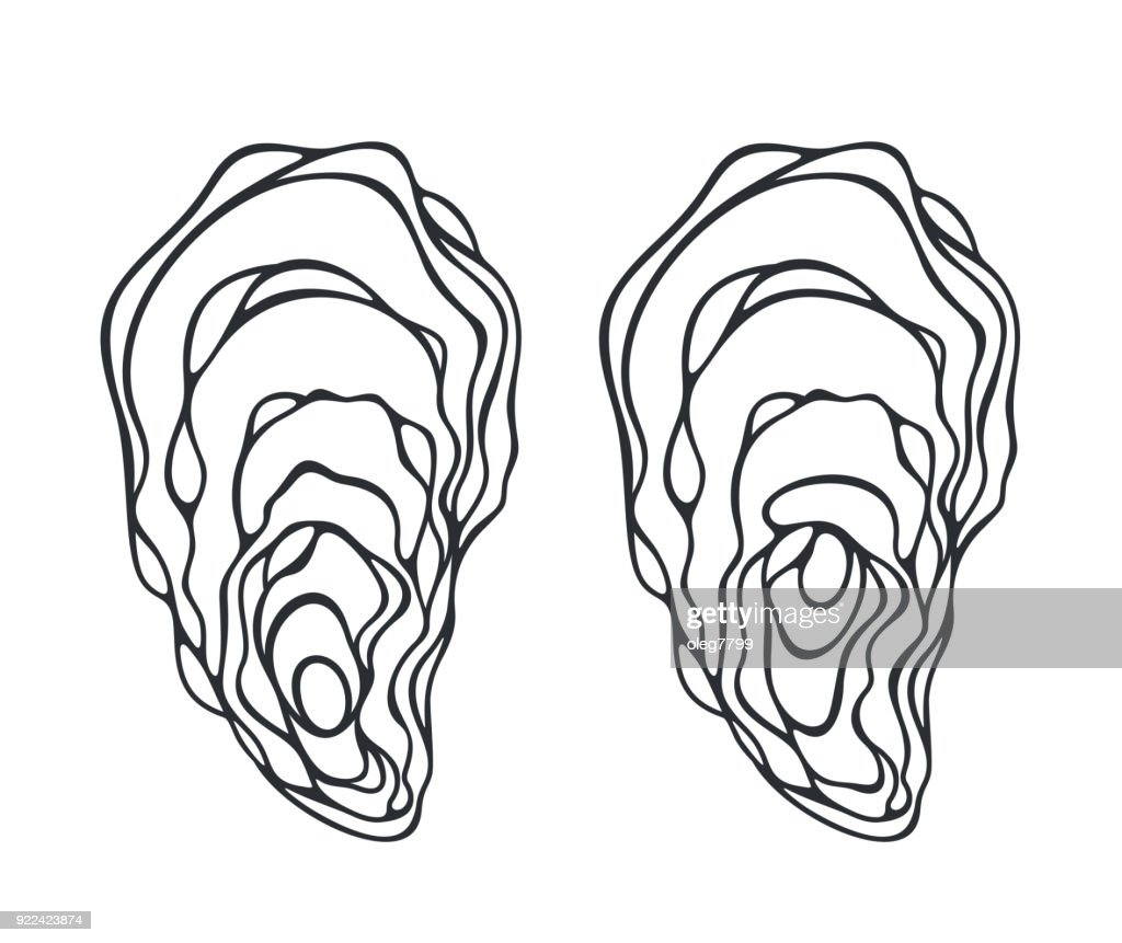 Oyster set. Isolated oyster  on white background