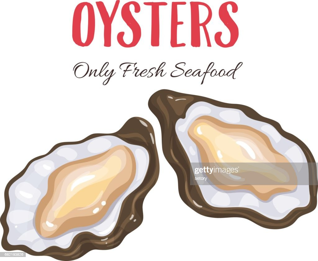 Oysters vector illustration in cartoon style