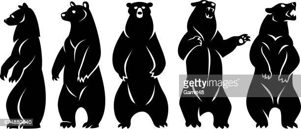 Paquete bears
