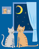 A pair of domestic cats in their home in the starry night