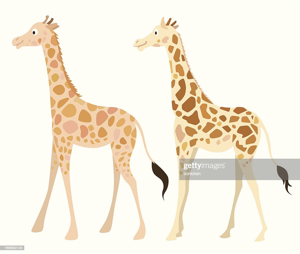 pair of giraffes : stock illustration